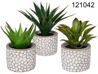 Decoration Succulents in white/grey cement pot, ...